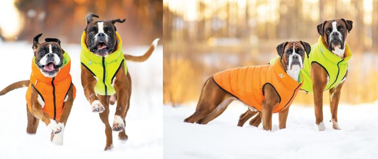 愛犬たちも冬支度